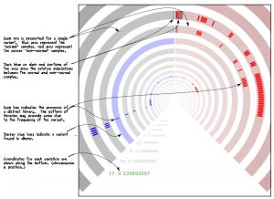 Semi-circular visualization of SNVs.